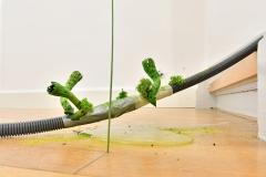 Auch aus dem Schlauchnetzwerk wachsen kleine Pilze. Foto: Konczak
