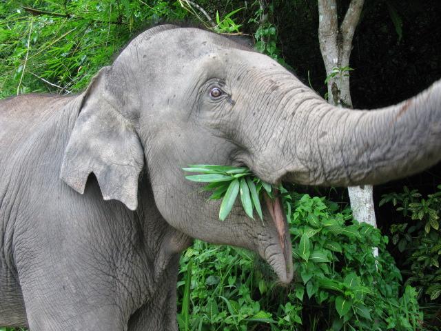 dschungelspaziergang mit elefant in nordthailand. Black Bedroom Furniture Sets. Home Design Ideas