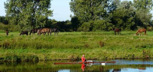 Die Allerniederung soll Natur- und Landschaftsschutzgebiet werden