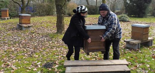 Dr. Anett Reckert, Leiterin der Städtischen Galerie Delmenhorst, hilft Imker Uwe Roselieb beim Auftstellen der Bienenhäuser in der Graft.