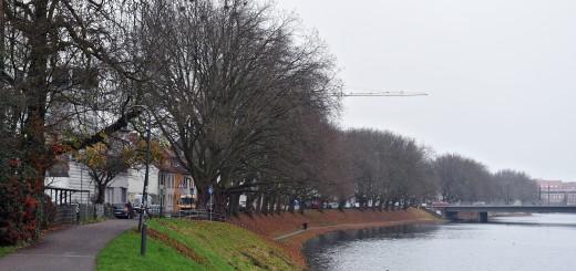 Die Platanen müssen für den Hochwasserschutz gefällt werden.