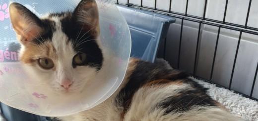 Die Helfer des Delmenhorster Tierschutzhofes mussten die schwerverletzte Katze Candy einschläfern lassen. Foto: Wessollek