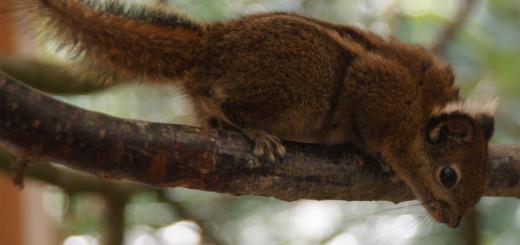 Im Tiergarten Ludwigslust gibt es jetzt Asiatische Streifenhörnchen als neue Publikumsattraktion.