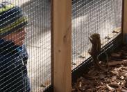 Asiatische Streifenhörnchen sind sehr zutraulich, das freut den dreijährigen Jonte, der dem flinken Nagetier ganz nahekommen kann. Foto (2): Möller