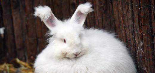 botanika sind derzeit puschelige Kaninchen zu sehen.