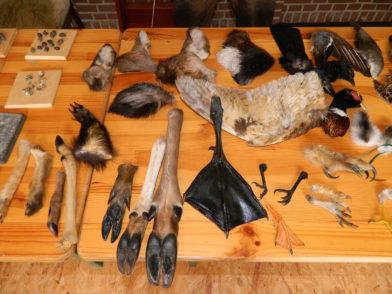 Neben präparierten Tieren mussten die Prüflinge am Freitag auch einzelne Körperteile identifizieren. Foto: Bosse