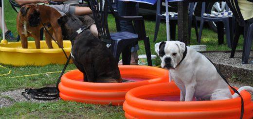 Die Hunde genießen ihre wohlverdiente Abkühlung. Foto: pv