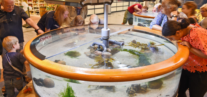 "Das Ausstellungsmodul ""Krabbe & Co."" mit lebendigem Anschauungsmaterial. Fotos: Schlie"