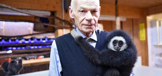 """Josef Vida vom Gartencenter Huchting mit der kleinen Gibbonäffin """"Wody"""". Sie ist im Huchtinger Zoo geboren. Dort lebten auch ein Elefant, Löwen, Otter und viele andere Tiere. Foto: Schlie"""