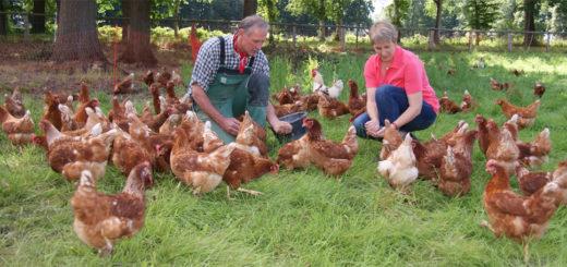 Christiane und Gustav Hertz-Kleptow sind stolz auf ihre neue Hühnerherde: Auf ihrem Hof in Ohlenstedt haben sie jetzt einen neuen Betriebszweig eröffnet, sie vermarkten Eier aus Freilandhaltung. Foto: Möller