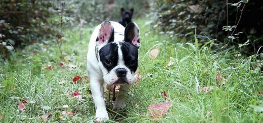 Vorsicht vor gefährlichen Tierködern ist geboten, wenn ein Hund allein durch die Gegend streift. Hundeköder