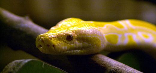 Hurra: Am Sonnabend ist Weltschlangentag. Foto:Schlie