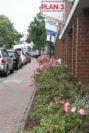 Im Sommer blühen die Rosenbüsche auf beiden Seiten der Hindenburgstraße. Foto: Füller