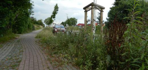 Teils schulterhoch wachsen die Wildkräuter Am Osterholze. Für Anwohner werden die Grundstücksein- und -ausfahrten dadurch immer schlechter einsehbar. Foto: Bosse