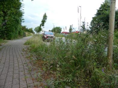 Zu viel des Guten: Weil die Wildblumen teils bis auf Brusthöhe wuchsen, beklagten sich Anwohner Am Osterholze über Sichtbehinderungen.  Foto: Bosse