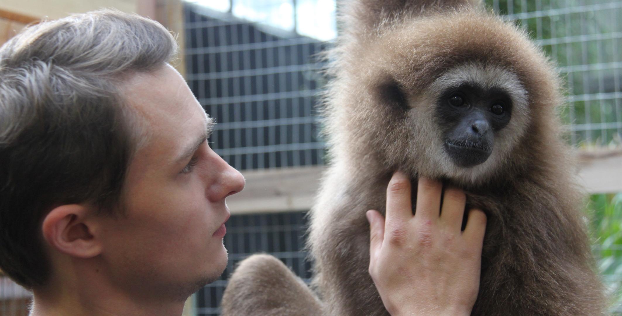 Gibbons Erkunden Ihr Neues Zuhause In Bremen