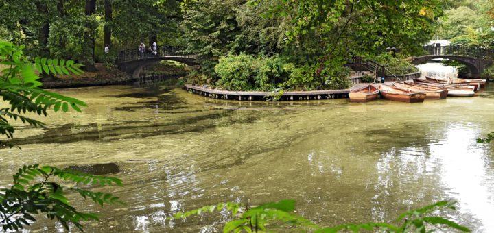 Grüne Schlieren wabern auf den Seen im Bürgerpark. Foto: Schlie