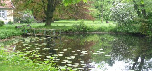 Der Park von Witzleben (auf dem Foto im Frühling) kann am Sonntag im Rahmen einer Führung besucht werden. Foto: Suhren
