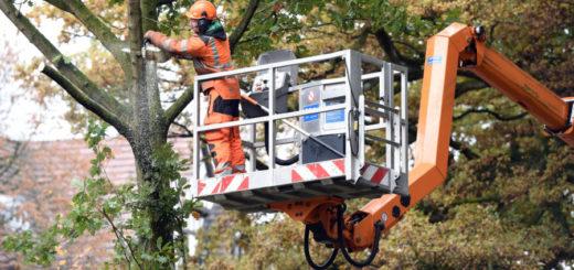 Die Gärtner des Umweltbetrieb Bremen sind gerade an der Hollerallee im Einsatz, um die Bäume verkehrssicher zu machen. Foto: Schlie