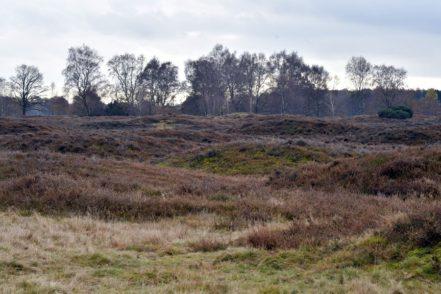 Das Gräberfeld ist die größte bronze- und eisenzeitliche Nekropole im nörlichen Mitteleuropa. Foto: Konczak