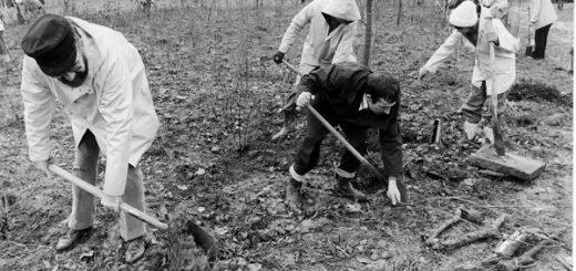 Im Herbst 1976 pflanzten hunderte Ehrenamtliche Bäume und Sträucher auf dem Gelände zwischen Grolland und Kirchhuchting und legten so die Wurzel für den heutigen Park links der Weser in Huchting.