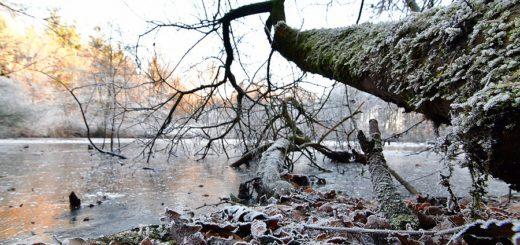 Der Tiergartenteich soll zu einem naturnahen Gewässer entwickelt werden. Foto: Konczak