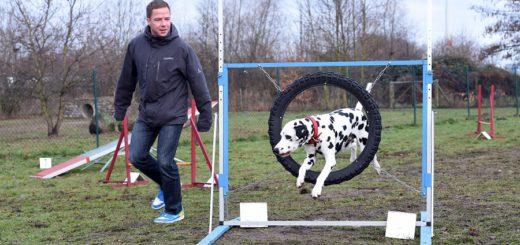 Vitakraft-Mitarbeiter dürfen ihre Hunde mit ins Büro bringen. Die Mittagspause verbringen Herrchen und Hund auf dem firmeneigenen Auslaufplatz und der Trainingsstätte. Foto: Schlie