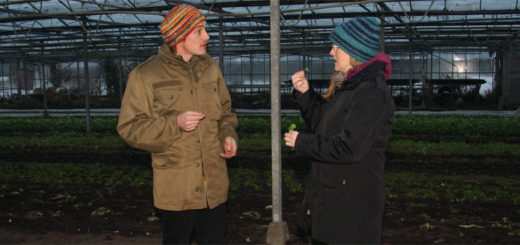 Sabine Röding lässt sich von Jan Bera die frischen Salate im Gewächshaus zeigen.Foto: Möller
