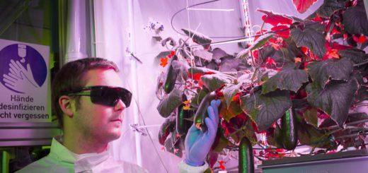 Paul Zabel hat im Labor mit seinem Team bereits Gurken ohne Erde und Sonnenlicht gezüchtet. Foto: pv