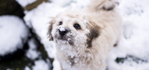 """Auch wenn es kalt ist - die meisten Hunde brauchen keinen """"Winterpullover"""" erklärt der Bremer Tierschutzverein. Symbolfoto/pixabay"""