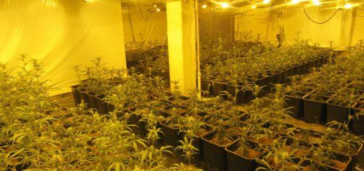 Die entdeckte Indoor-Plantage in Utbremen. Foto: Polizei Bremen