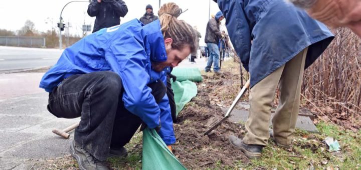 Freiwillige haben in dieser Woche den Krötenschutzzaun an der Senator-Apelt-Straße aufgebaut. Foto: Schlie