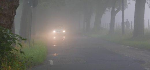 Besonders bei Nebel und in Baumalleen sei das Einschalten des Abblendlichts auch am Tage von größter Bedeutung, betonen Verkehrsexperten. Foto: ADAC/Achim Otto