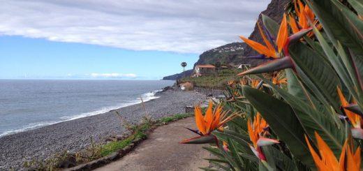Strelizien, Strand und steile Hänge – auch das kann Madeira sein.