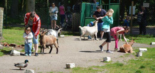 Auch ein echtes Highlight: Das Füttern der kleinen und großen Ziegen im Streichelzoo des Magic Park.Fotos: Magic Park Verden