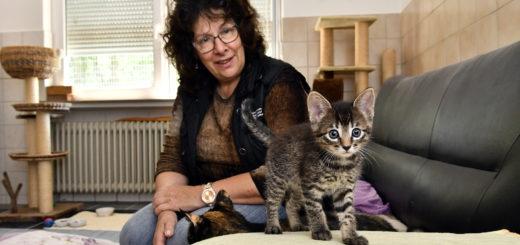 Zurzeit ist das Team um die Vorsitzende Brigitte Kall in großem Maß mit dem Aufpäppeln der vielen Kitten beschäftigt. Foto: Konczak