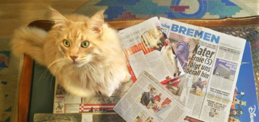 Kater Ernie genießt den Medienrummel. Foto: Niemann