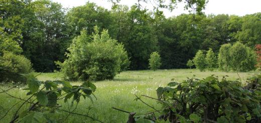 Laut Bebauungsplan soll diese zur Zeit noch eingezäunte Wiese bald als Parkfläche dienen.