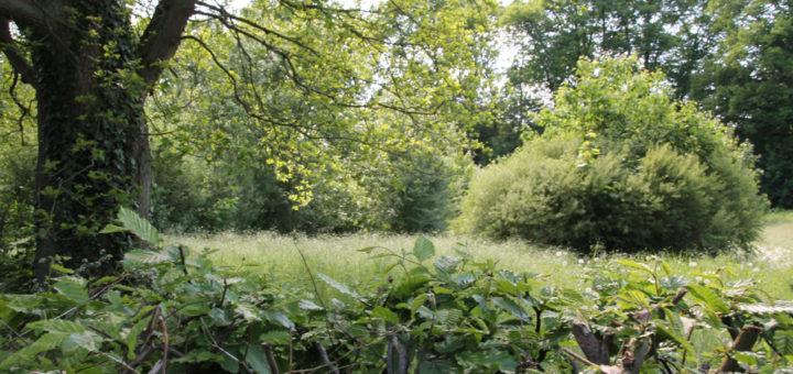 Zur Zeit ist die Woldes Wiese mit einem Stachelzaun eingezäunt – gleichzeitig mit Vollendung des Bauprojekts an der Billungsstraße, soll die Wiese neu bepflanzt sein.Foto: Spier