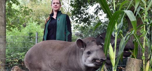 Auf Tuchfühlung mit Tapiren und Wasserschweinen: Christine Richter fühlt sich zwischen exotischen Tieren ausgesprochen wohl.Foto: Konczak