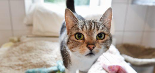 Katzen wie Paula werden in der Katzenstation versorgt. Foto: Schlie