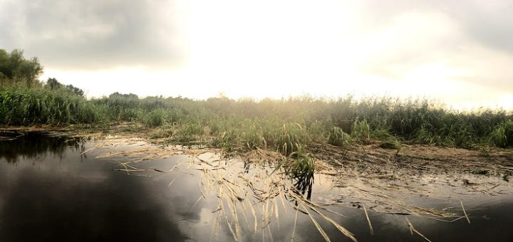 Die Nutrias haben große Bereiche im gesamten Blockland zerstört. Foto: Henke
