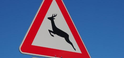 728 Wildunfälle gab es im vergangenen Jahr im Landkreis Verden. Die Polizei empfiehlt dem Wild nicht auszuweichen. Foto: pv