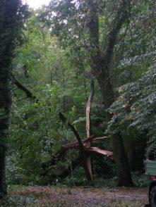 DSCN7303. Foto: Bürgerparkverein
