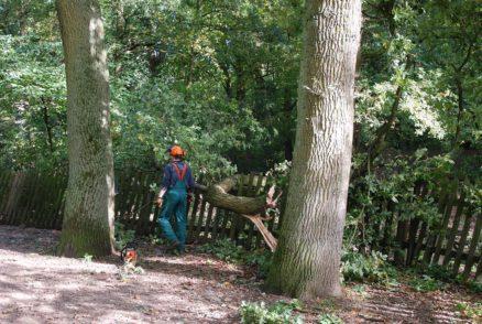 DSC_0041. Foto: Bürgerparkverein