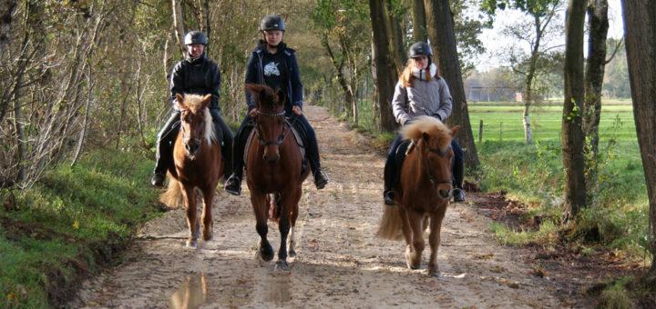 Der Querweg in Südwede galt als attraktive Sandstrecke für Reiter, nun bekommt der Feldweg eine Schotterdecke, für Reiter soll nur noch eine Sandspur am Rand verbleiben. Foto: Möller