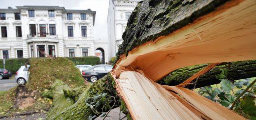 Der Sturm hat in Bremen zahlreiche Bäume zerlegt. Fotos: Schlie
