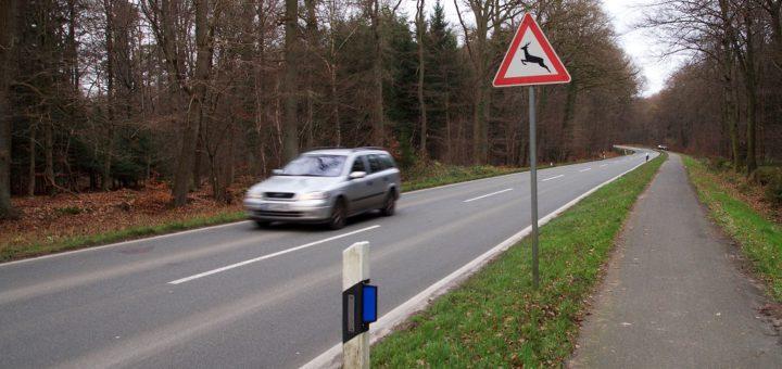 Besonders in Waldgebieten müssen Verkehrsteilnehmer in diesen Wochen mit erhöhtem Wildwechsel rechnen. Foto: Kaufmann/DJV
