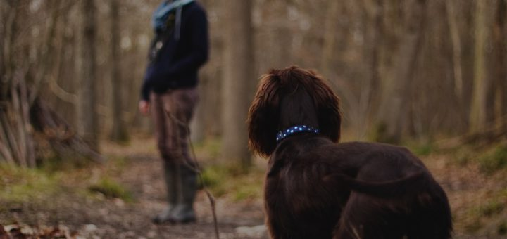 Hund im Wald/ Brut- und Setzzeit