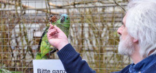 Papageien-Experte Hans-Hermann Braune (hier mit einer Amazone) und sein Team erläuterten den Amtstierärzten, wie Papageien versorgt und behandelt werden sollten. Foto: Schlie